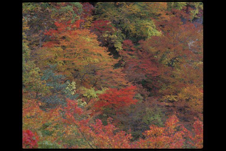 宮城県鳴子峡の紅葉